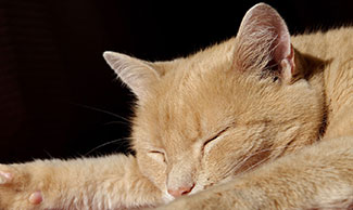 Ginger cat taking a nap on a sofa