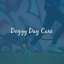 milton keynes doggy day care
