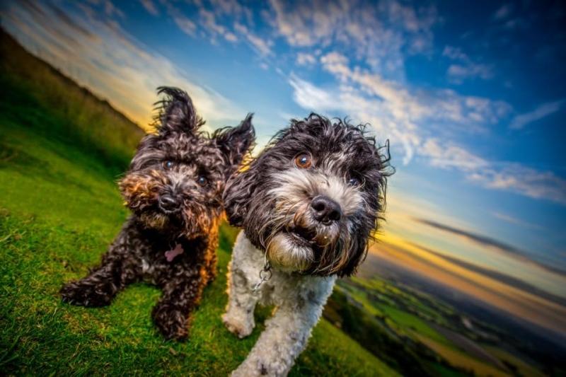 Puppy Care in MK