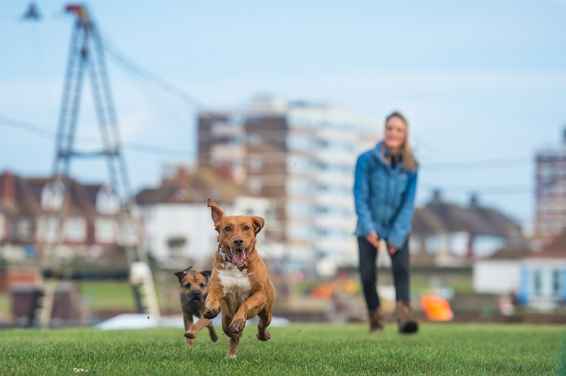 Dog Walking Services in MK