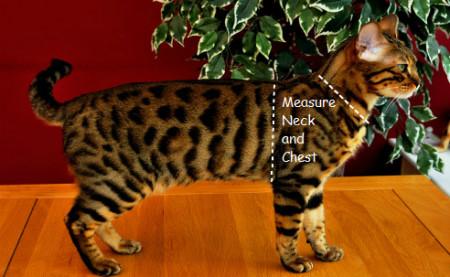 cat on harness milton keynes