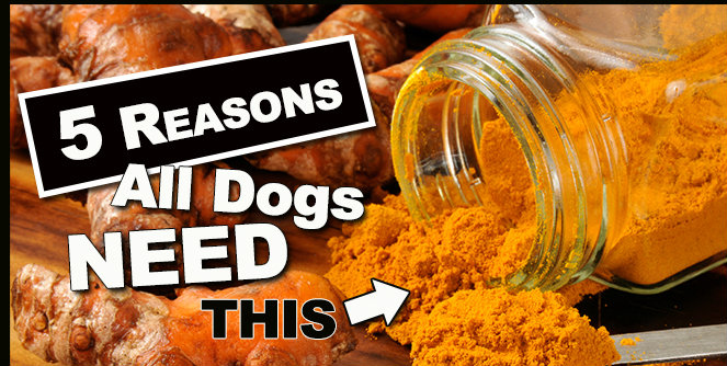 Turmeric Root: the herb that helps fight cancer in our pets