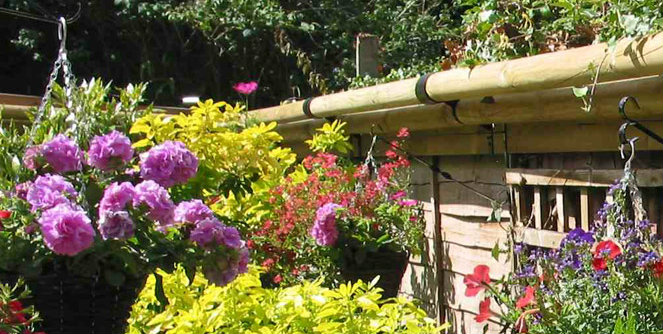 cat proofing your garden