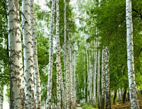6 Amazing Health Benefits of Walking in the Woods