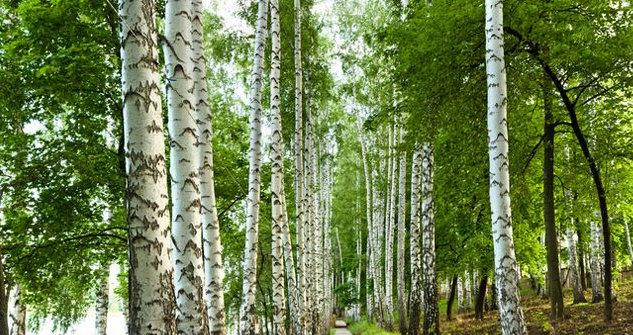 woods milton keynes