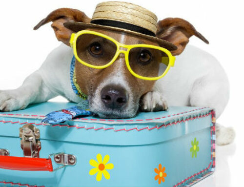 House Sitting – Grizzle's tips and tricks