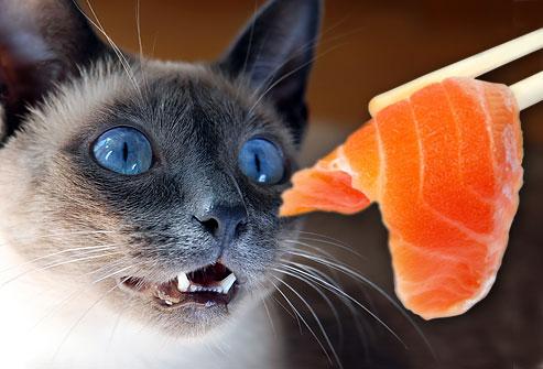 cat sitter milton keynes