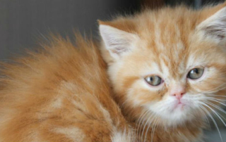 cat care milton keynes