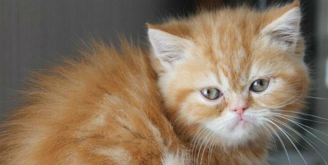 cat care milton keynes