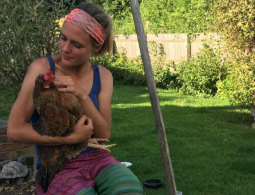The Joy of Keeping Hens: Goodbye to Bulbi