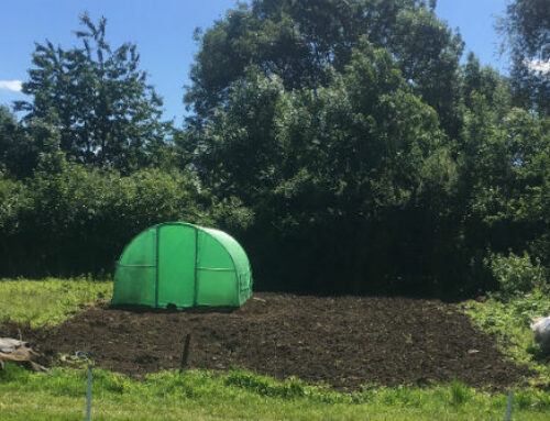 Down the Allotment: June 2017