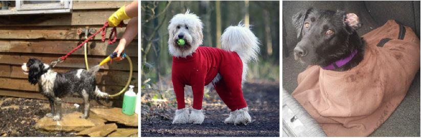 dog walking milton keynes
