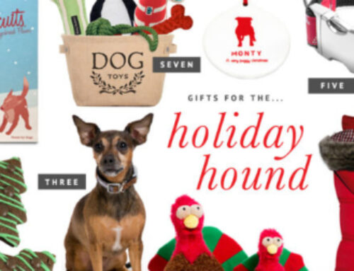 Santa Is Here! Gift Ideas for Your Dog