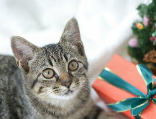 Santa is Here! Gift Ideas for your Cat