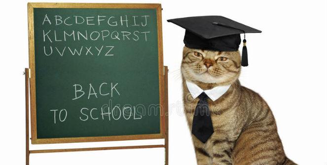 cat-teacher-blackboard-hat-tie-wrote-alphabet-board-white-background-97757547