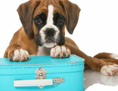 Is Home Boarding Suitable for my dog?