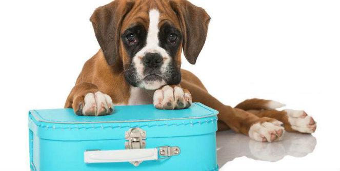 dog boarding milton keynes