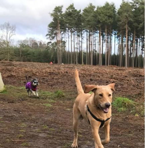 Dog Walker Woburn Sands