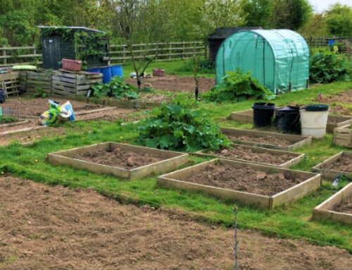 Down the Allotment: March 2018