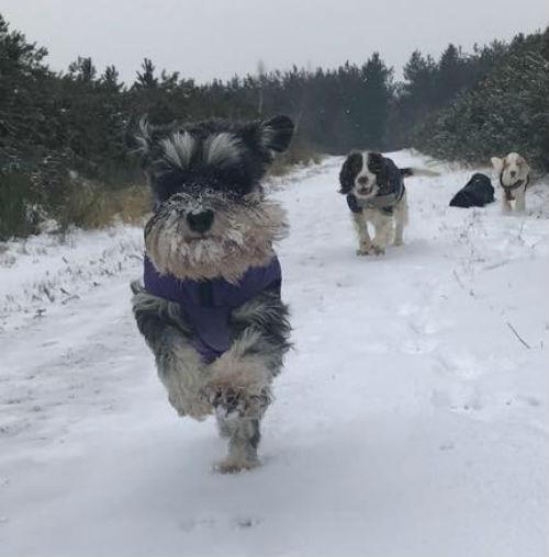 lulu in the snow