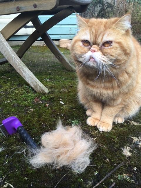 pankee grooming