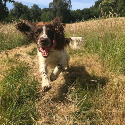 aspley guise dog walker